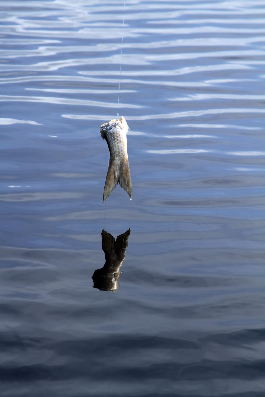 FishTailBait.jpg