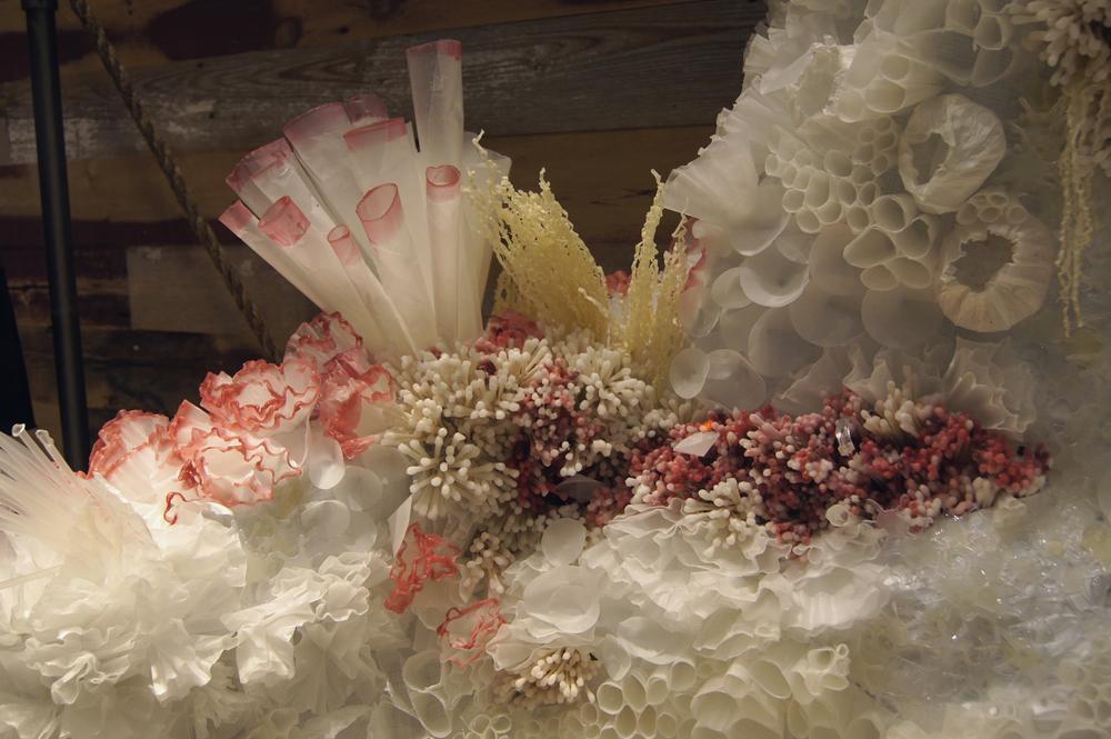 coral web 2.jpg