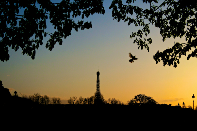 bird and eiffel