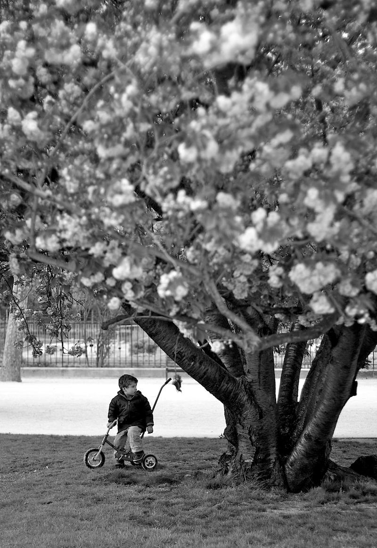 kid and cherry tree