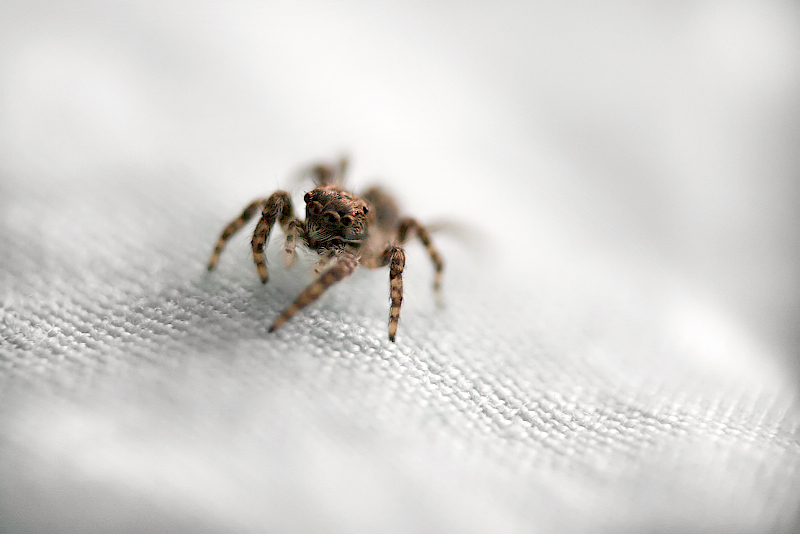 tiny visitor
