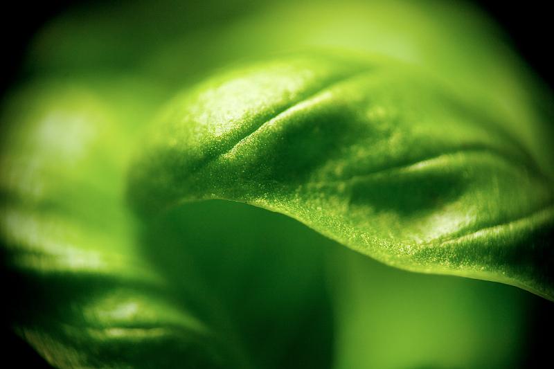 leafy macro