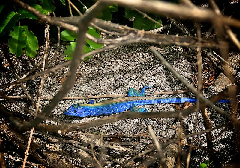 pretty in blue