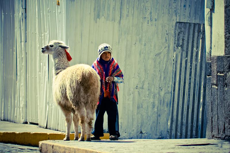 kid and llama
