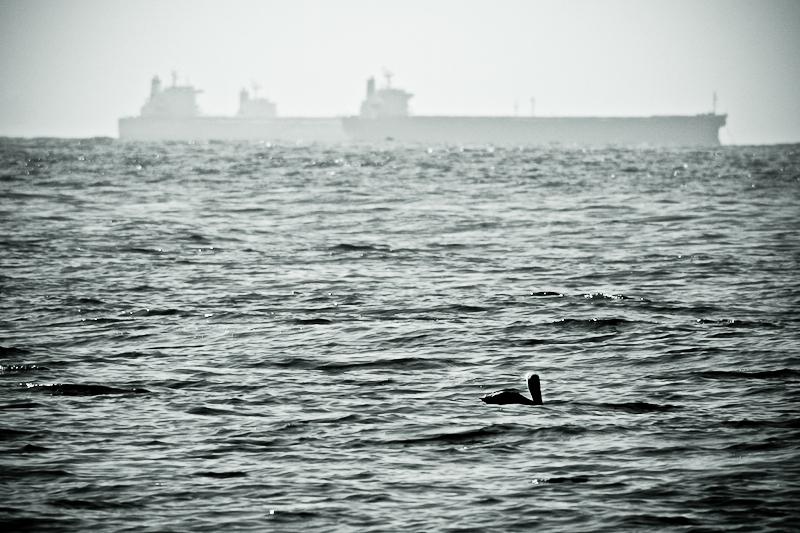 pelican & ships