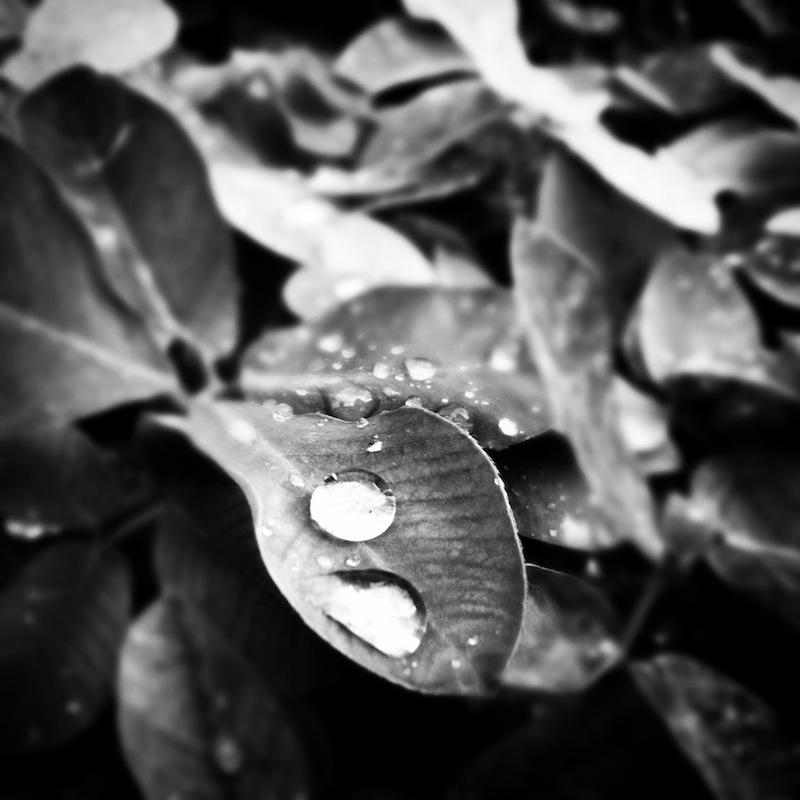 noir drop
