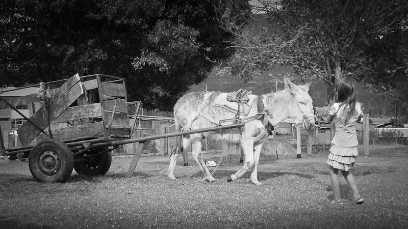 pulling el burro