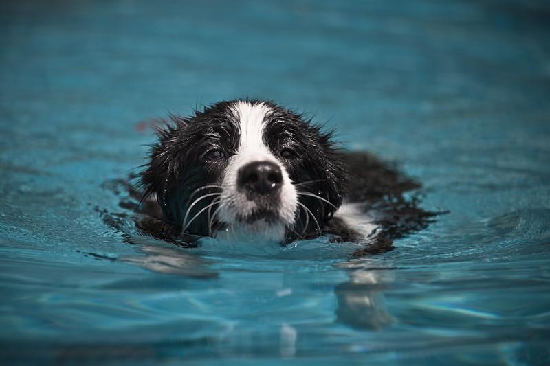 rookie swimmer
