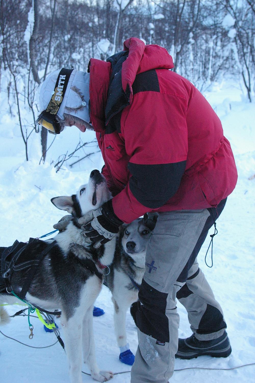 Huskys i Alta, Norge