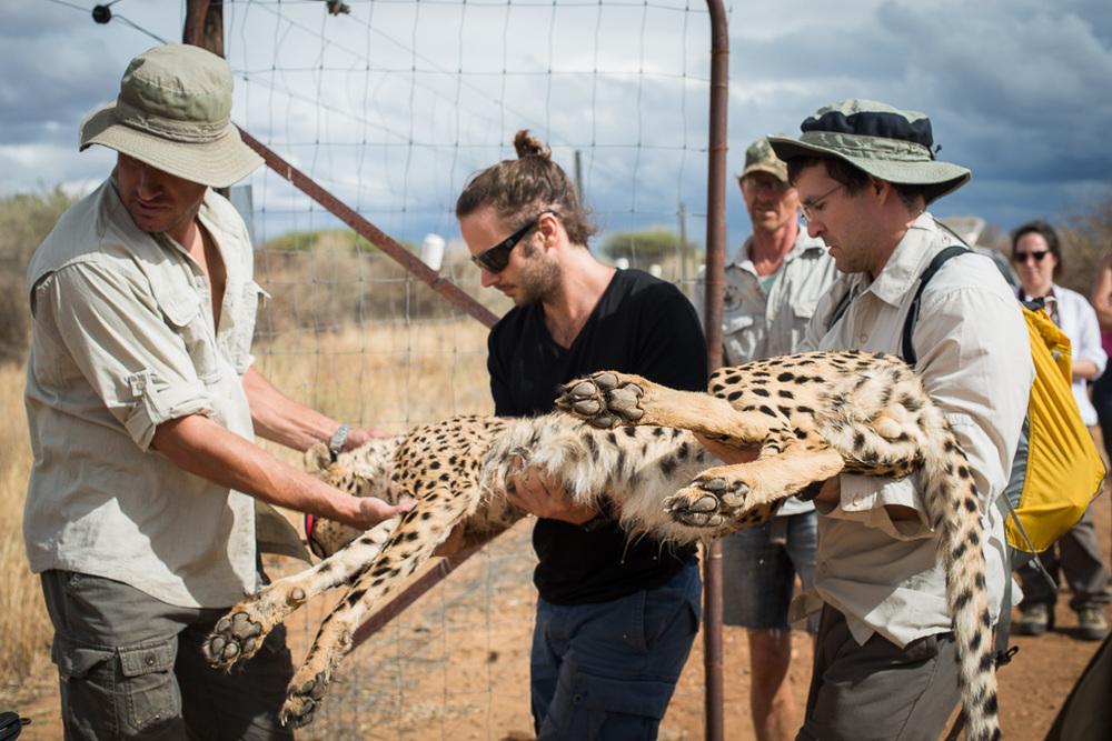 Conservation Medicine, Namibia