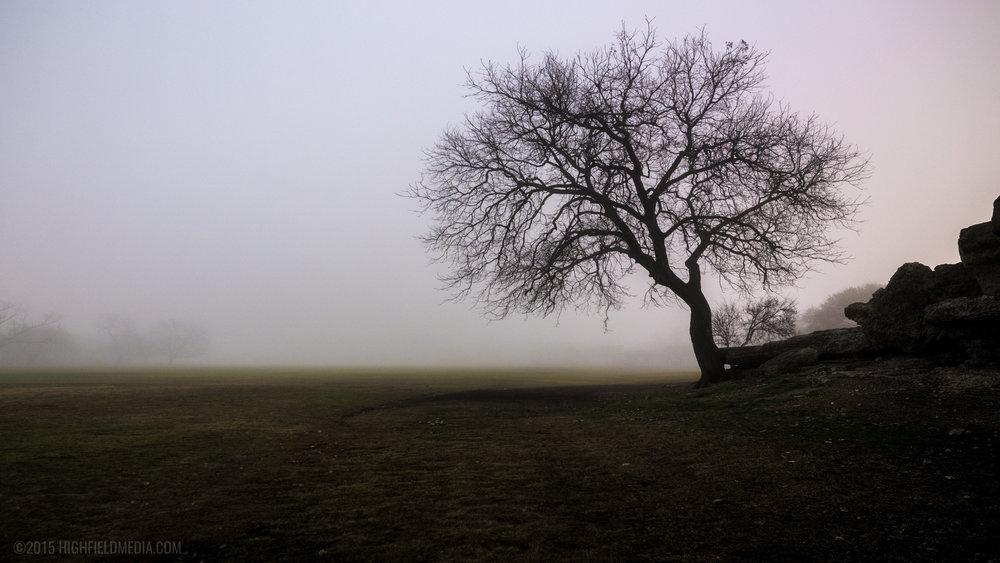 The Rock Island Pecan Tree in Fog