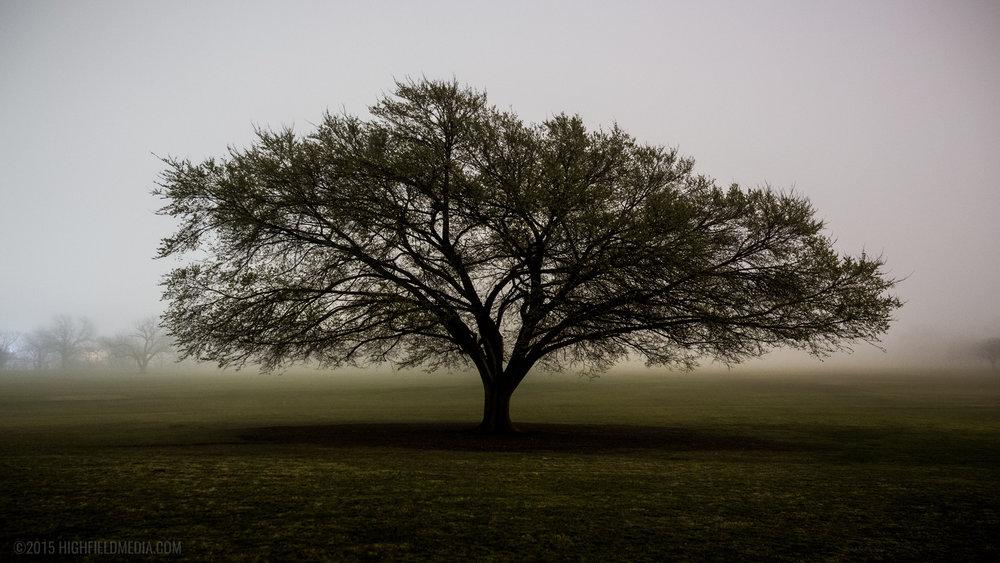 Zilker in Fog