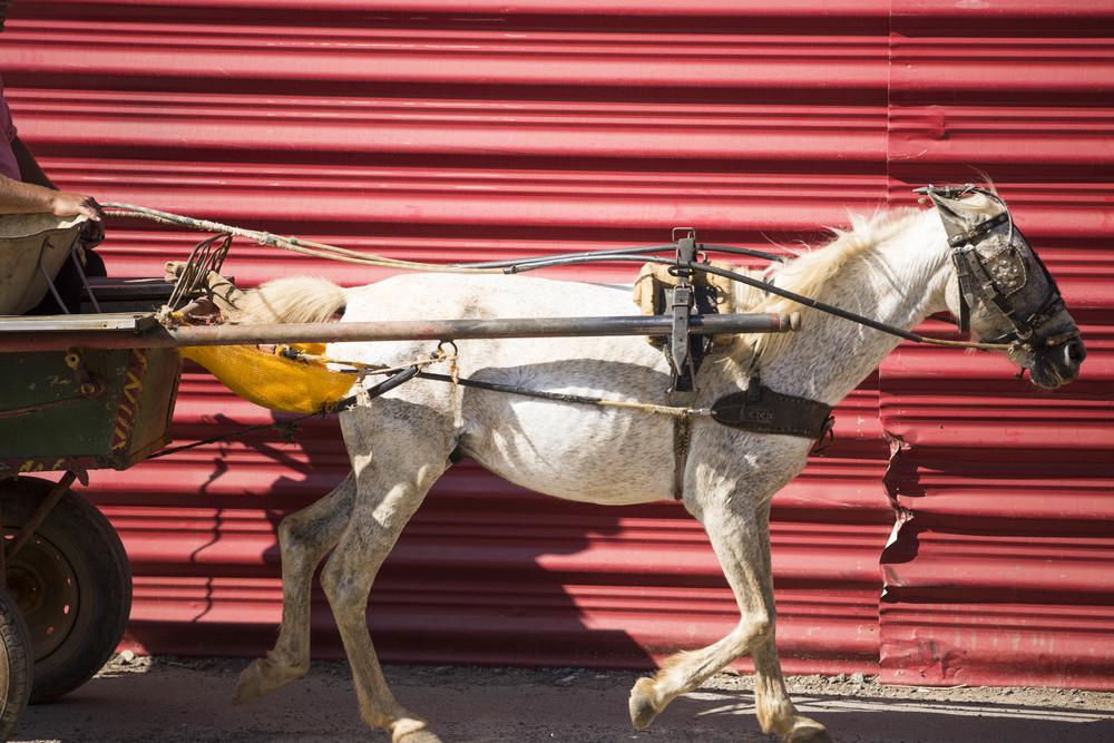 Cuba Web-9941.jpg