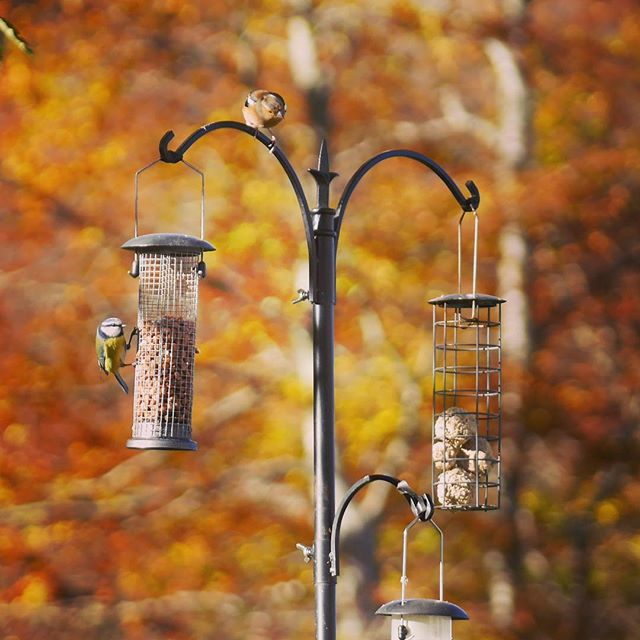 The birds of Glen Nevis were making the most of a beautiful autumnal day today!