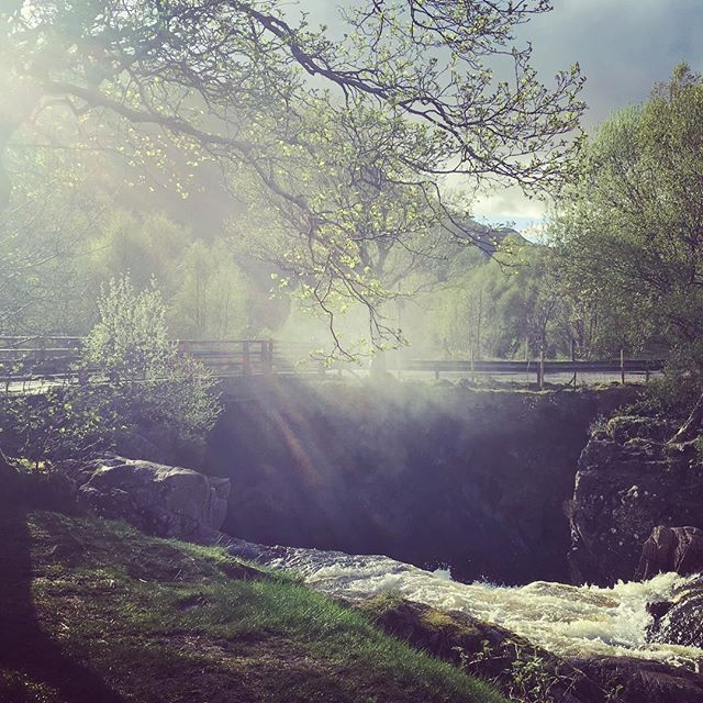 Evening sunlight catching the mist above the Lower Falls earlier this week