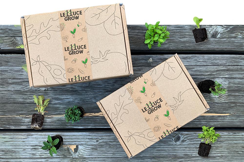Lettuce_Grow_Box-Seedlings.jpg
