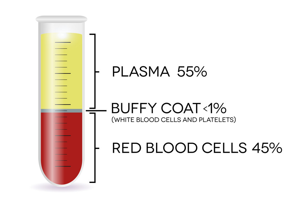 Blood-Components.jpg