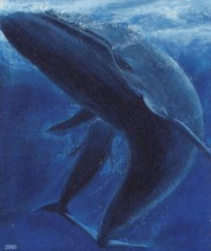 Blue Whale Image CC