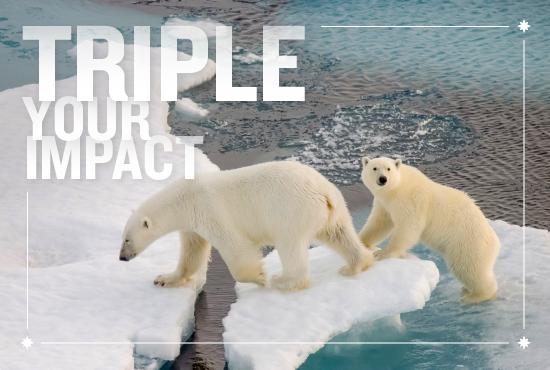 don-3357-triple-polar-bears.png