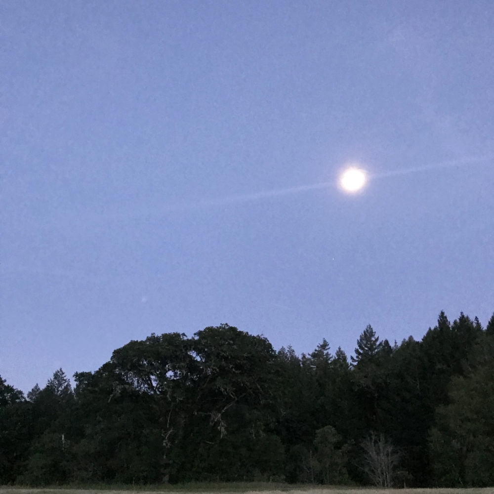 a nearly full moon at the Women's Herbal Symposium