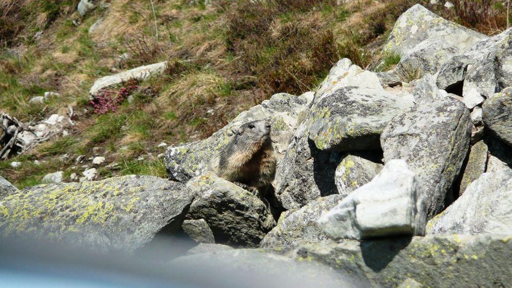 064 varáita-máira ridge .jpg