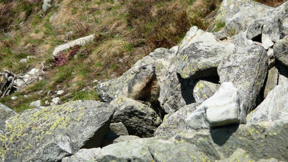 065 varáita-máira ridge .jpg