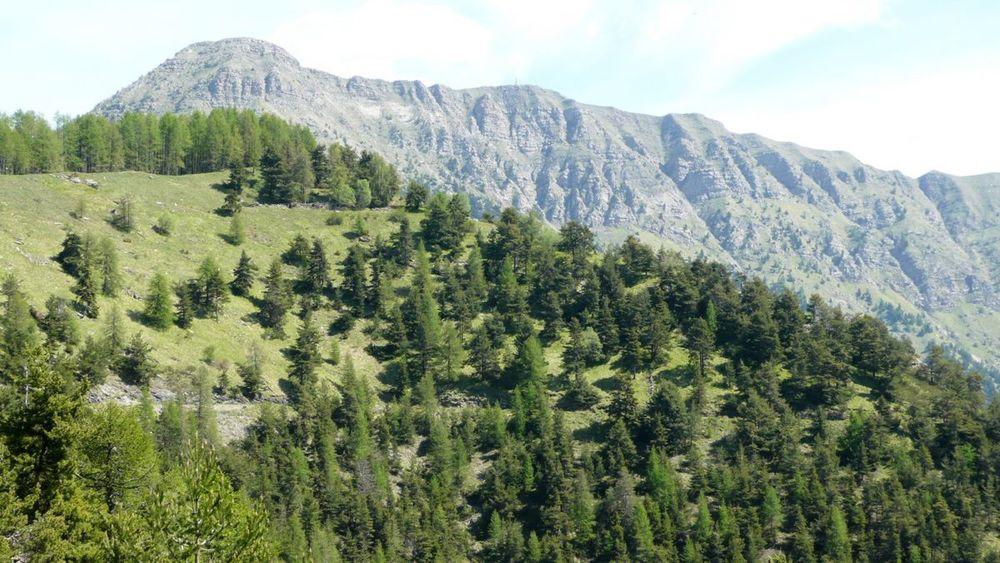 033 ligurian ridge roads - col sanson to colle ardente, mont saccarel.jpg