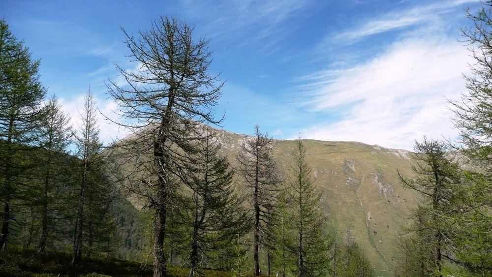 074 ligurian ridge roads - pas du tanarel to c. de la celle vielle, road to col des seigneurs.jpg