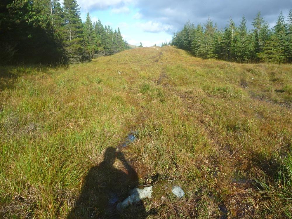 "The ""footpath"" through the bogland"