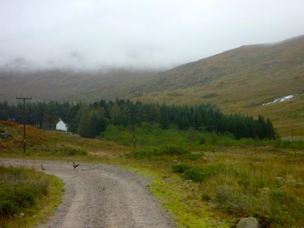 Glenkinglass Lodge and pheasants
