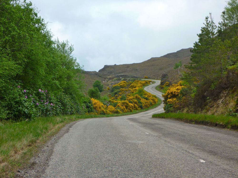 road winding through gorse and rhododendron.jpg