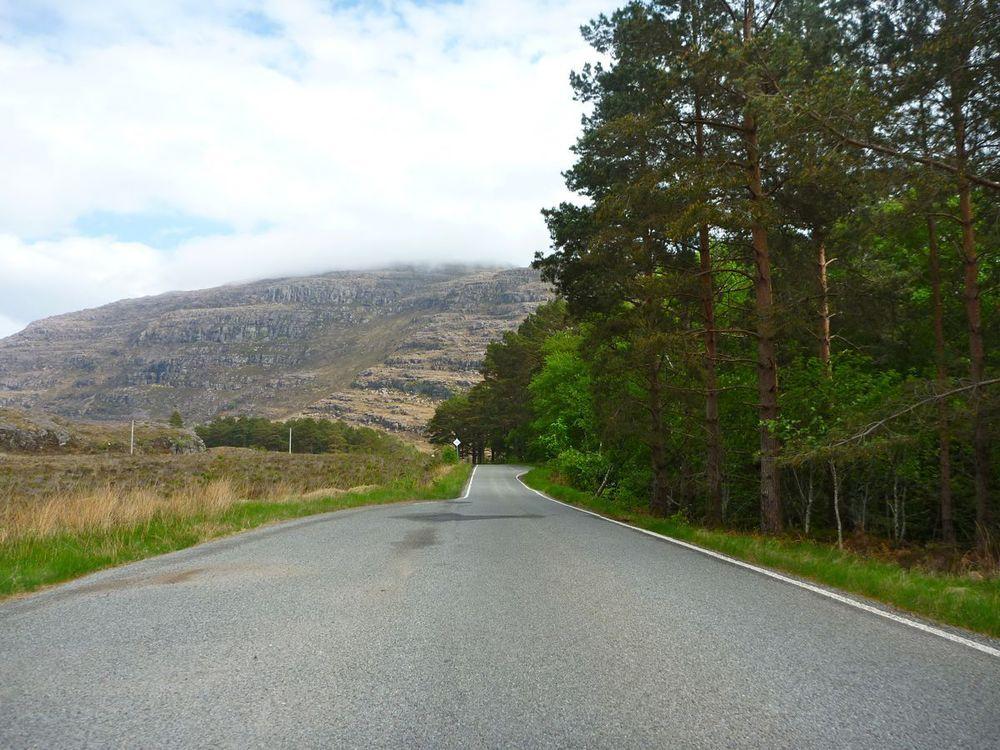 old pinewoods on road to kinlochewe.jpg