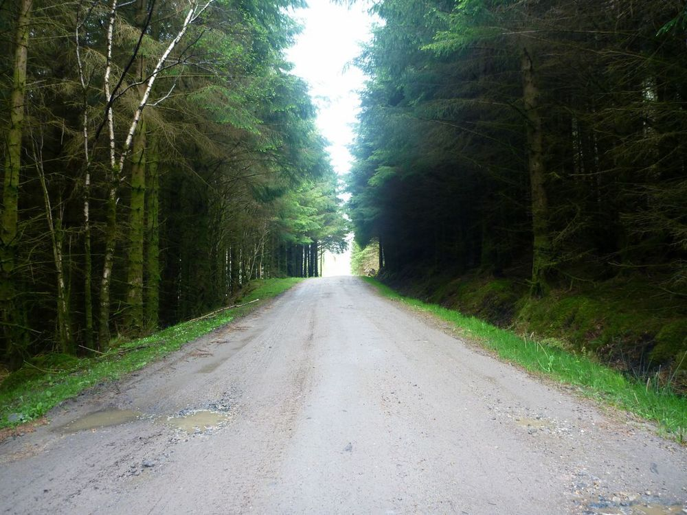 forest road-2.jpg