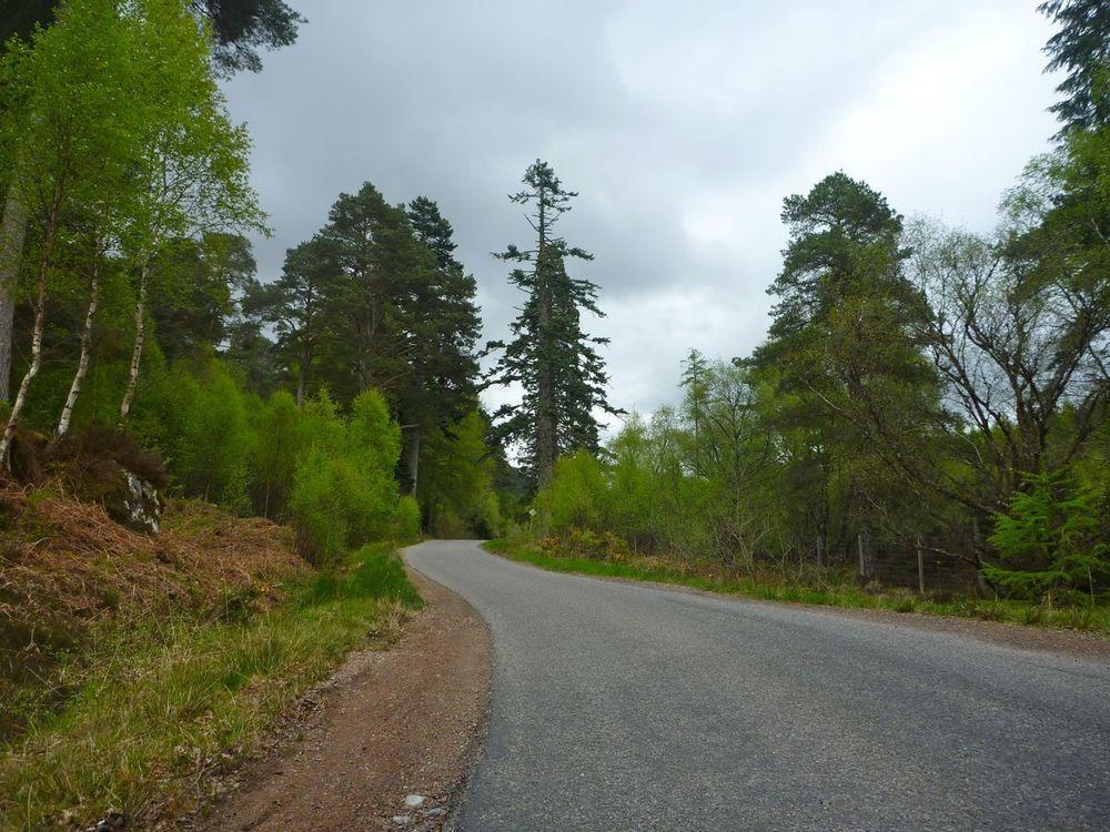 old pinewoods along loch lochy.jpg