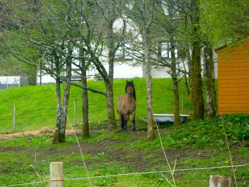 pony at scotstown suspicious of recumbent.jpg
