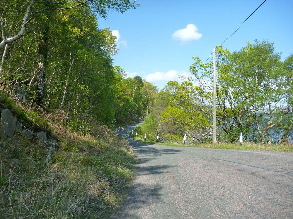 closer to salen the road winds through light forest.jpg
