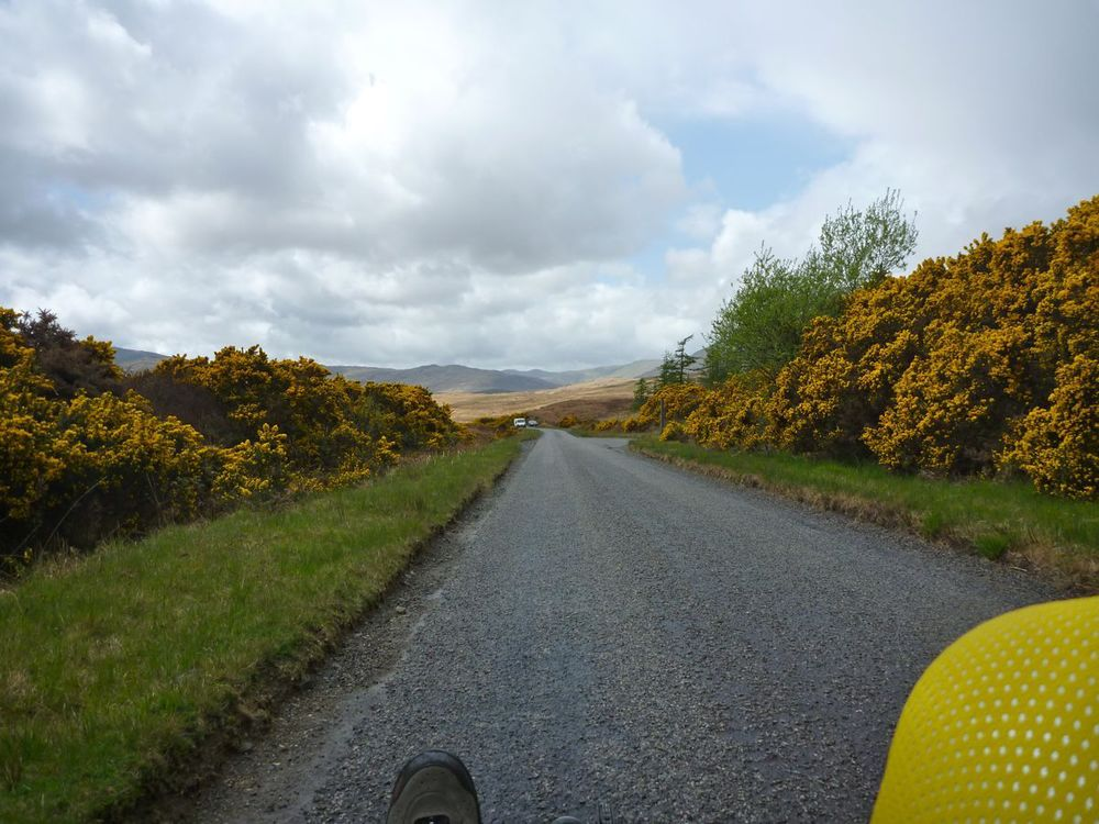 first scent of gorse.jpg