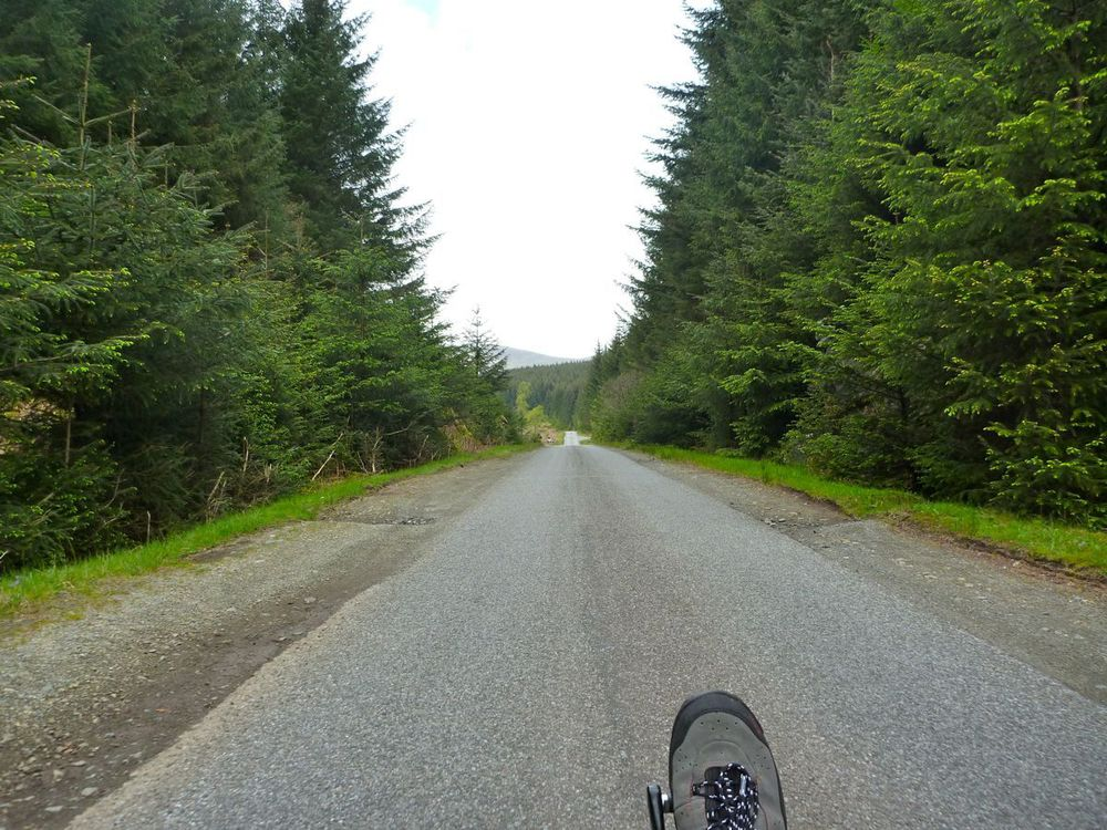 good single-track road through the forest.jpg