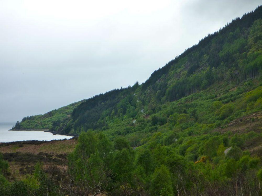 road to glenelg winds upward through forest.jpg