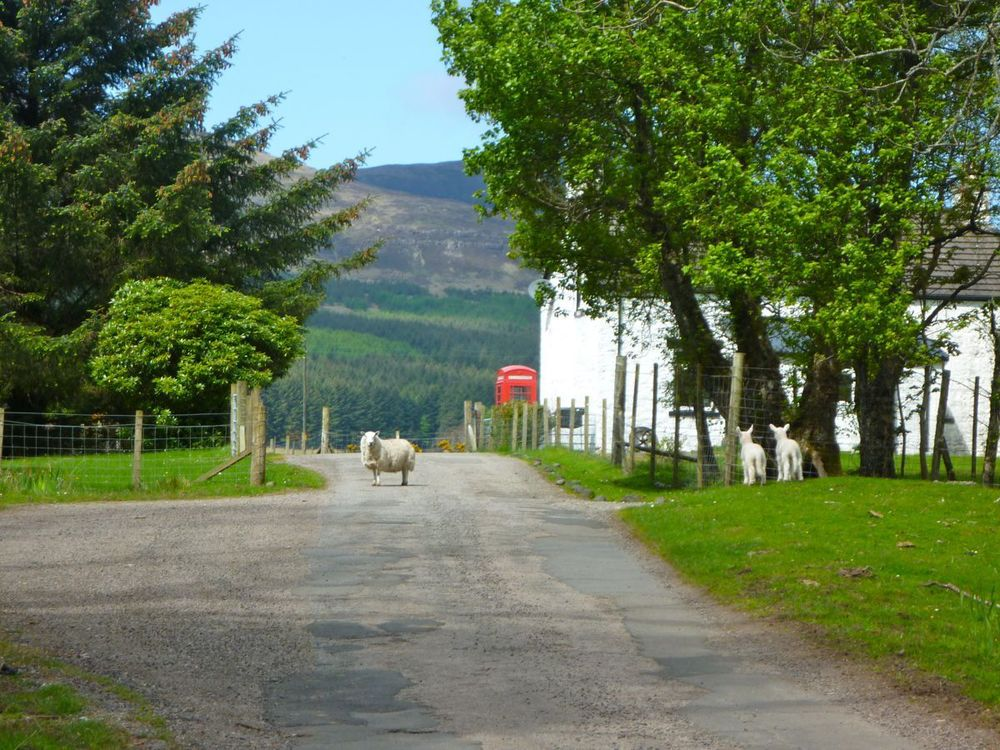 killiemore lambs.jpg
