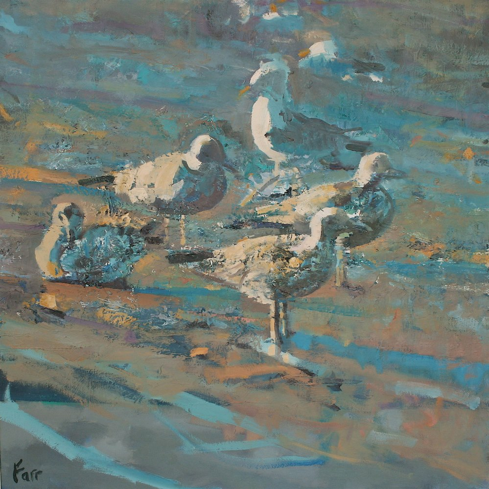 Seabirds, Ventry