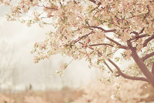 spring,cute,photography,pink,pretty,trees-ff53b0d0417eee4f01fbd19c53abdcc2_h.jpg