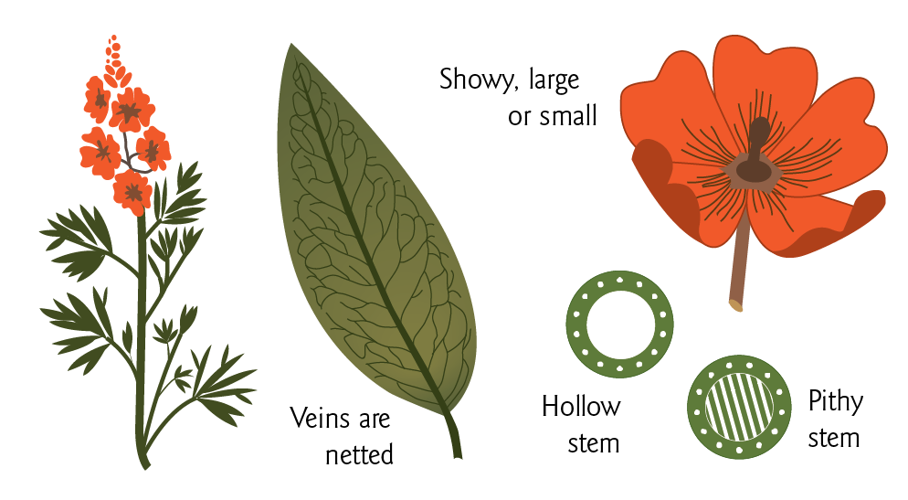 PlantIllustration_GuideVersion_Forbs_R8-01.png