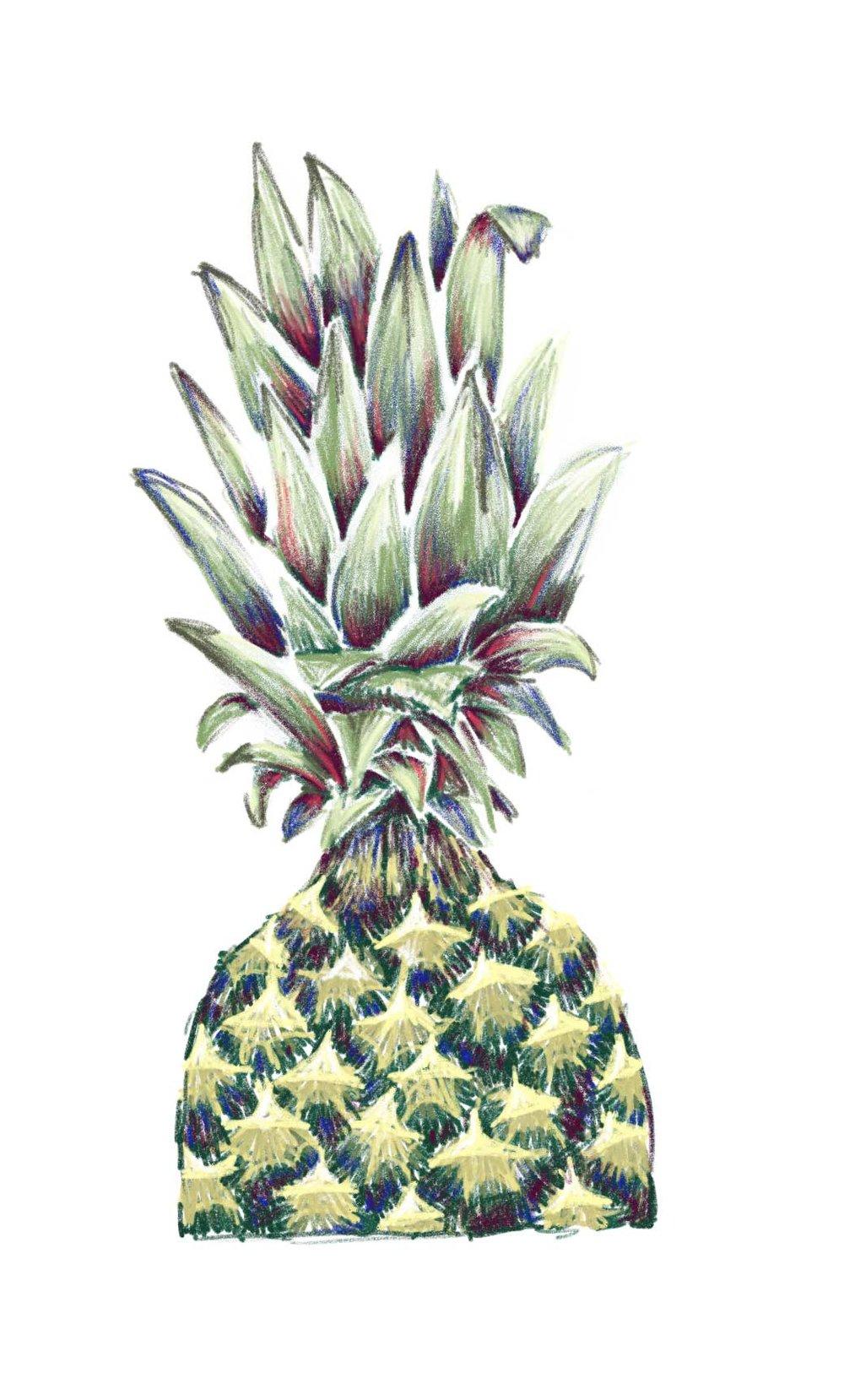 Pineapple_SS.jpg