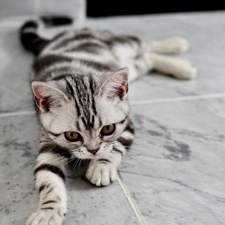 kitten on gray tile floor
