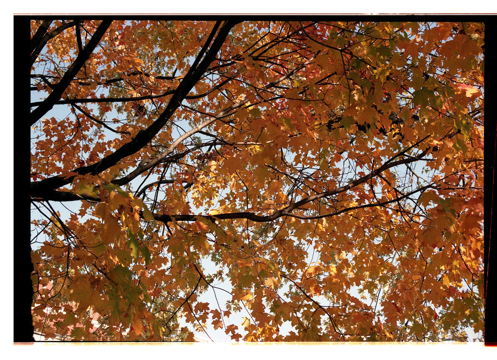 fallfilm2.jpg