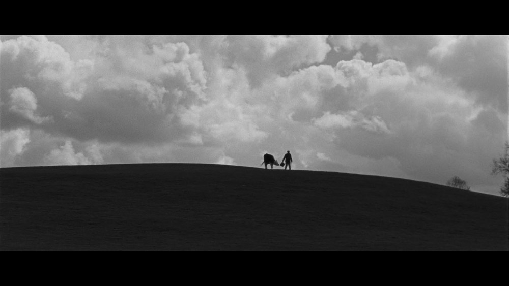 WHEN THE COW DISAPPEARED   - short film -