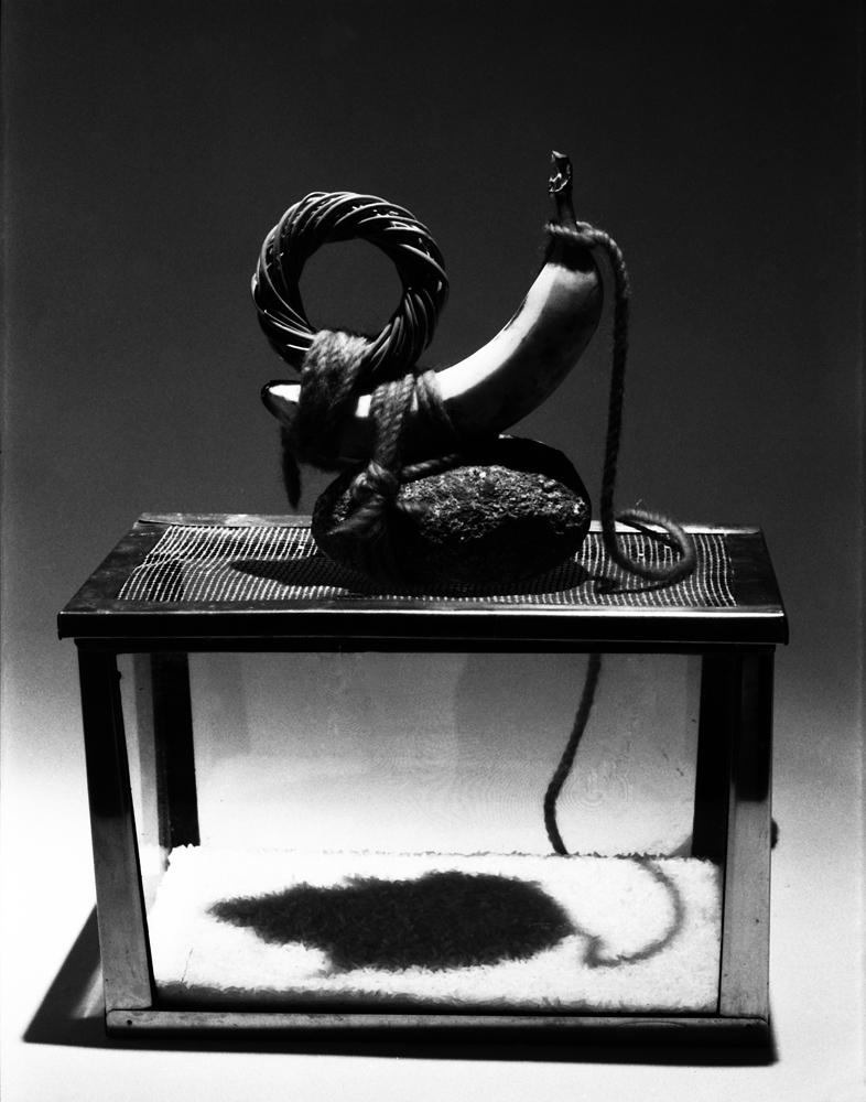 Mac Adams,Banana Rat