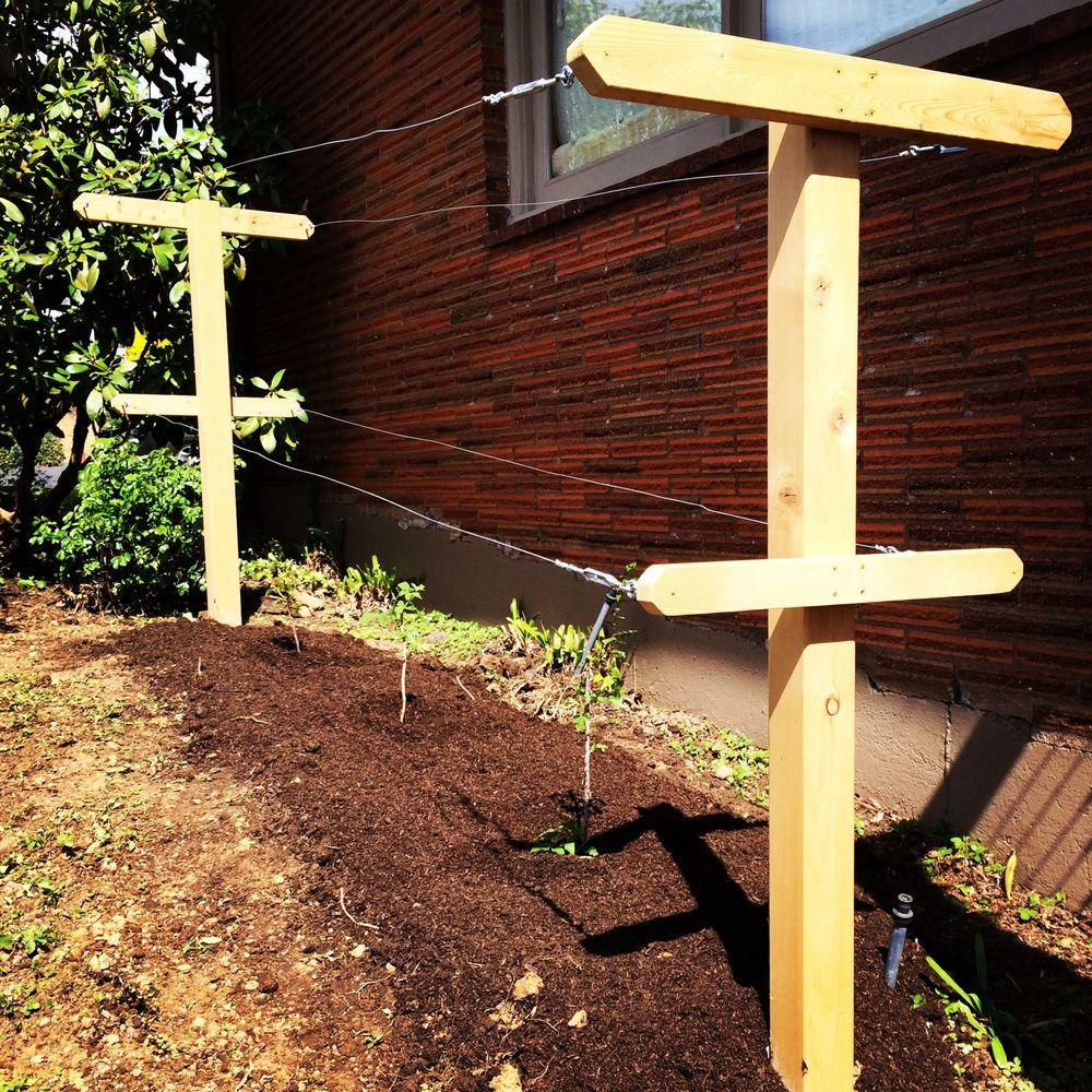 Creating Our First Vegetable Garden Advice Please: Portland Edible Gardens: Raised