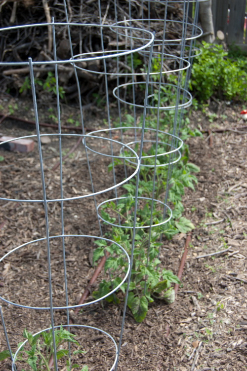 Simple tomato cages